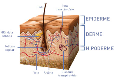 Camadas da pele